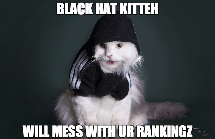 black-hat-cat
