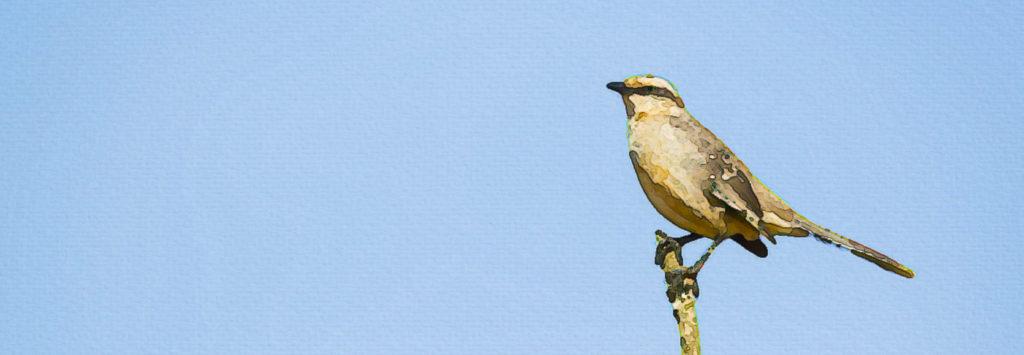SEO Mockingbird